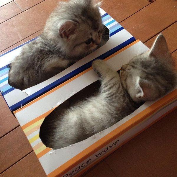 Смешные картинки кошек онлайн поднимающие настроение онлайн, надписью витамины открытки