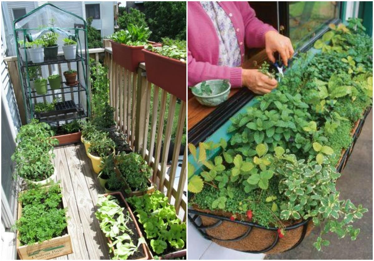 Tips For Starting An Apartment Garden // Urban Gardening Ideas