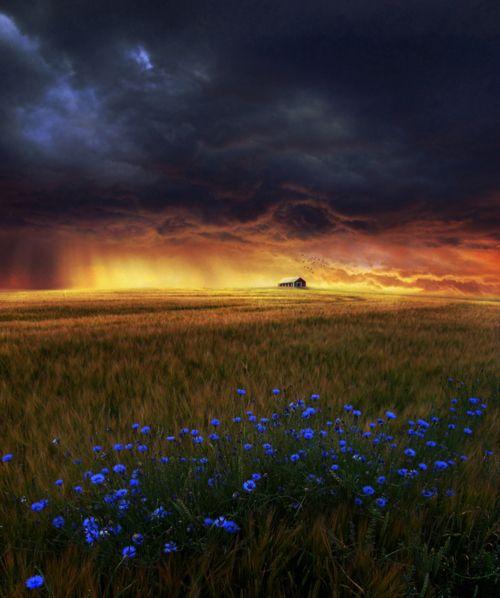 dream field by *kokoszkaa