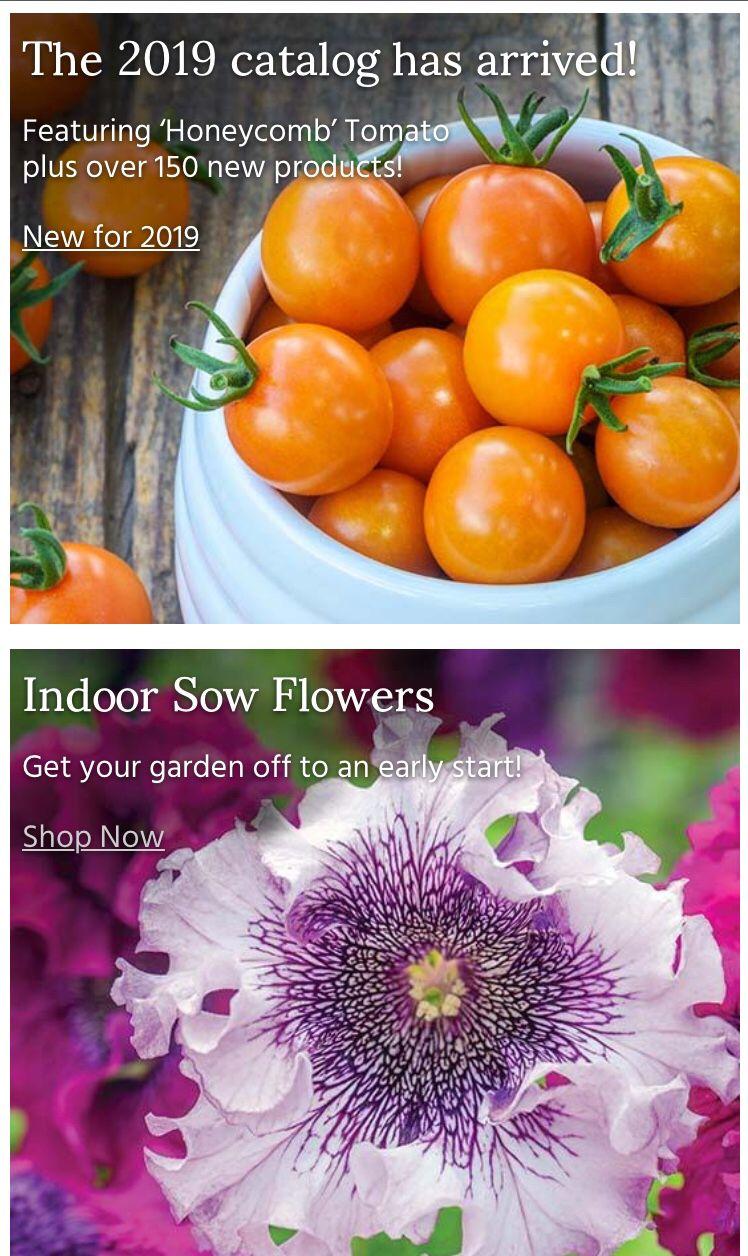 New 2019 Burpee Seeds Burpee seeds, Vegetable seed, Seeds