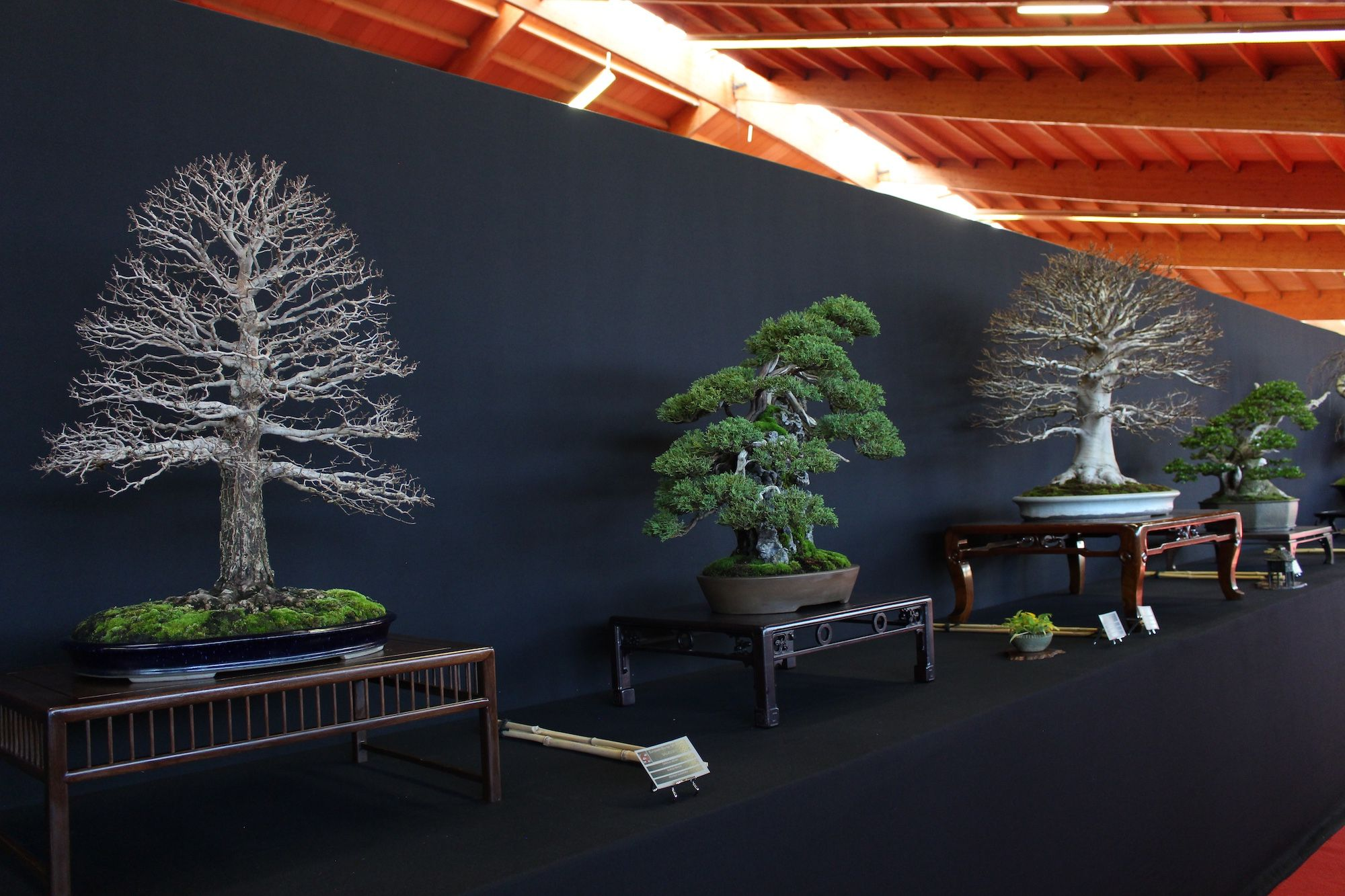 bonsai tree bonsai indoor bench