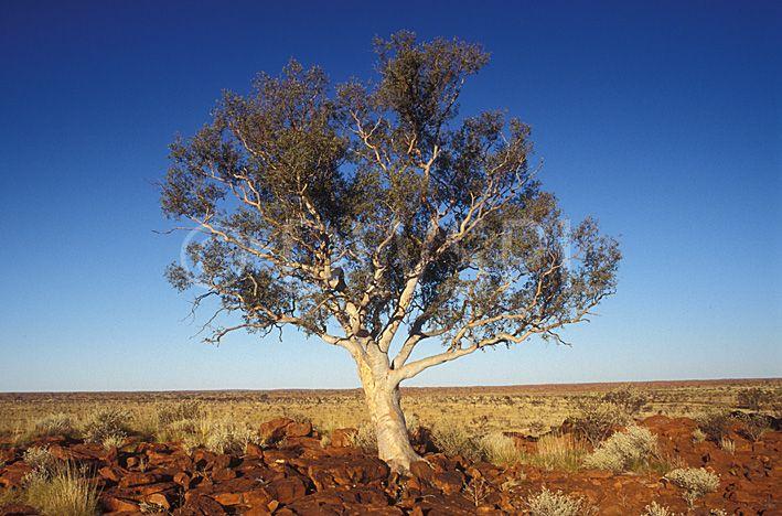 Stock Photo Image Australia Australian Australian Desert