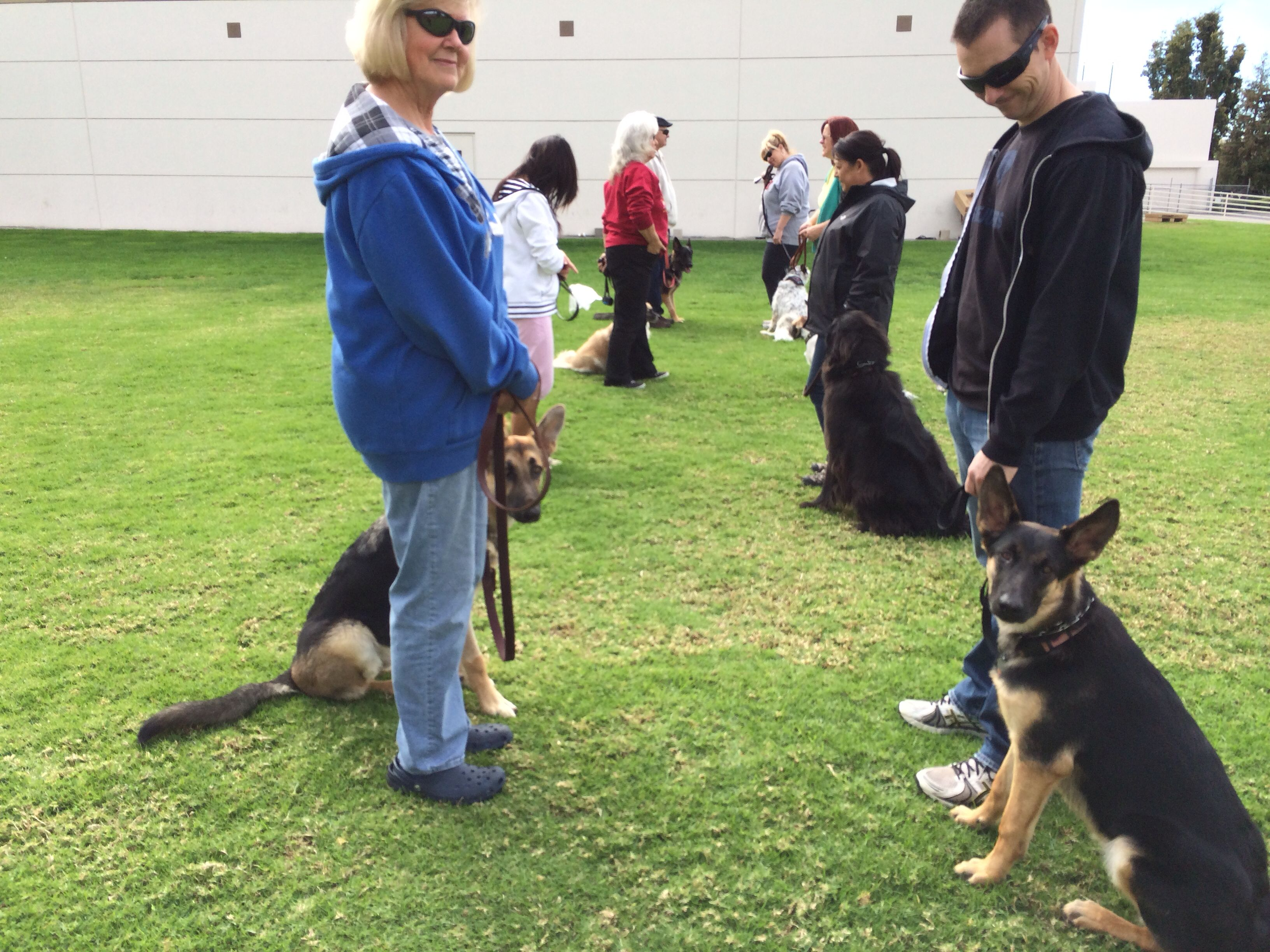 Intermediate Dog Obedience Class At Falco K9 Academy Doing The