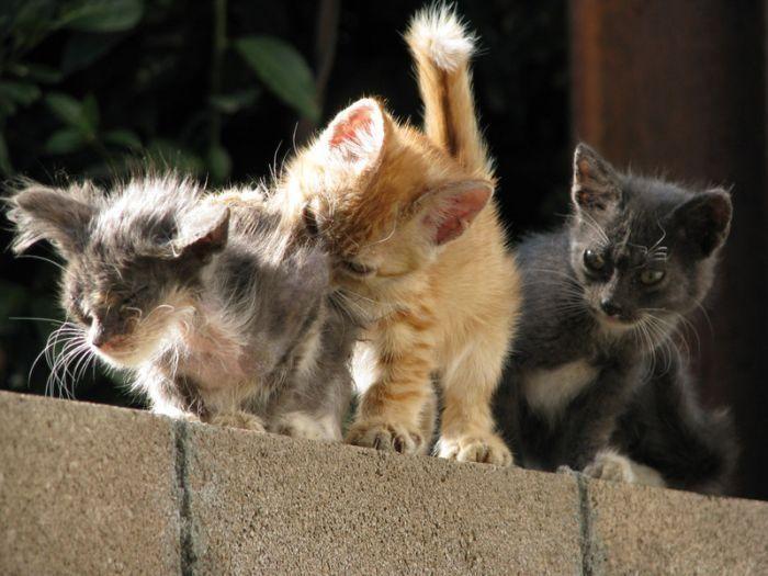 Картинки котов кошек и котят смешные, юбилею