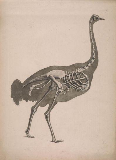 19th century taxonomy illustrations reveal the strange