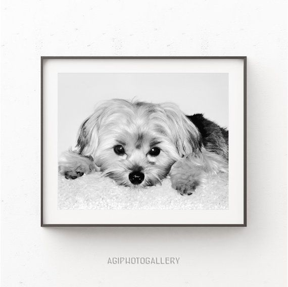 Yorkie print dog print dog wall decor dog printable poster dog poster print dog paw art dog nursery print yorkshire terrier