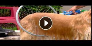 Questa invenzione faciliterà la vita dei cani e dei loro padroni!