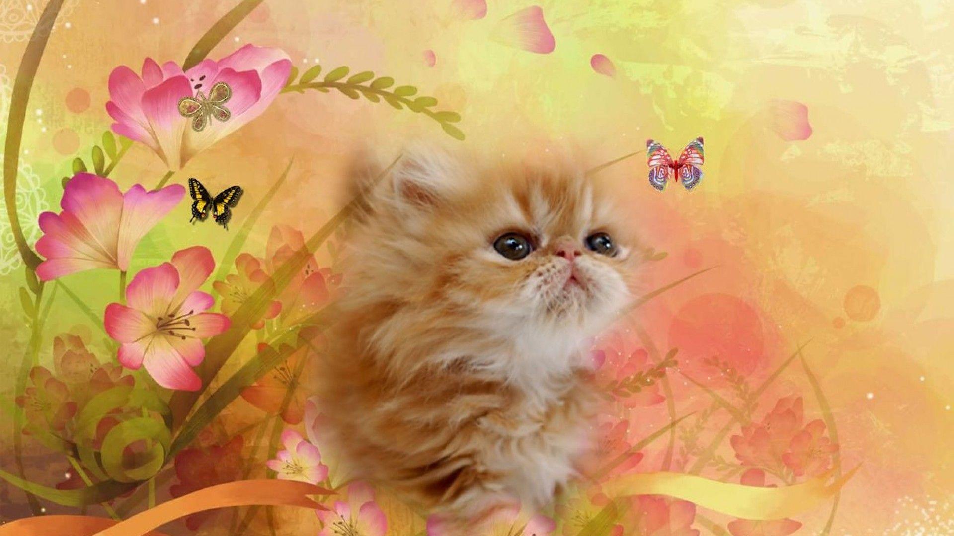 Best Wallpaper Cat Butterfly - abce8cddee92928968f28e7e5d460838  2018_194758 .jpg