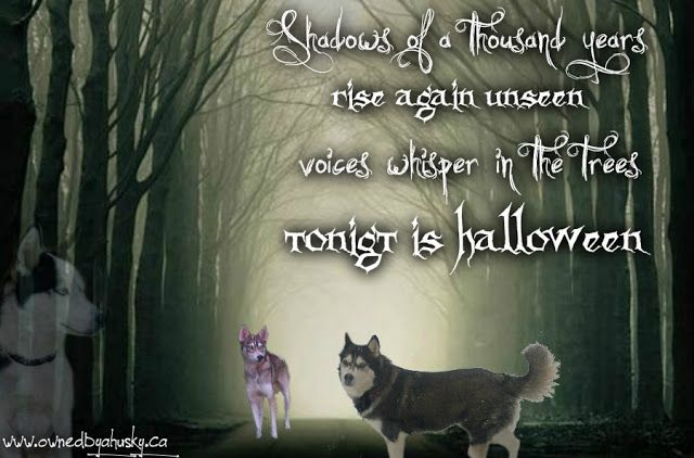 SpOoKy Halloween fun! | Love is being owned by a husky! | Bloglovin