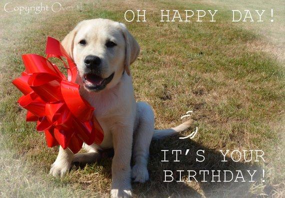 Dog Birthday Card YELLOW LABRADOR PUPPY With Happy Wishes Greeting Portrait Art