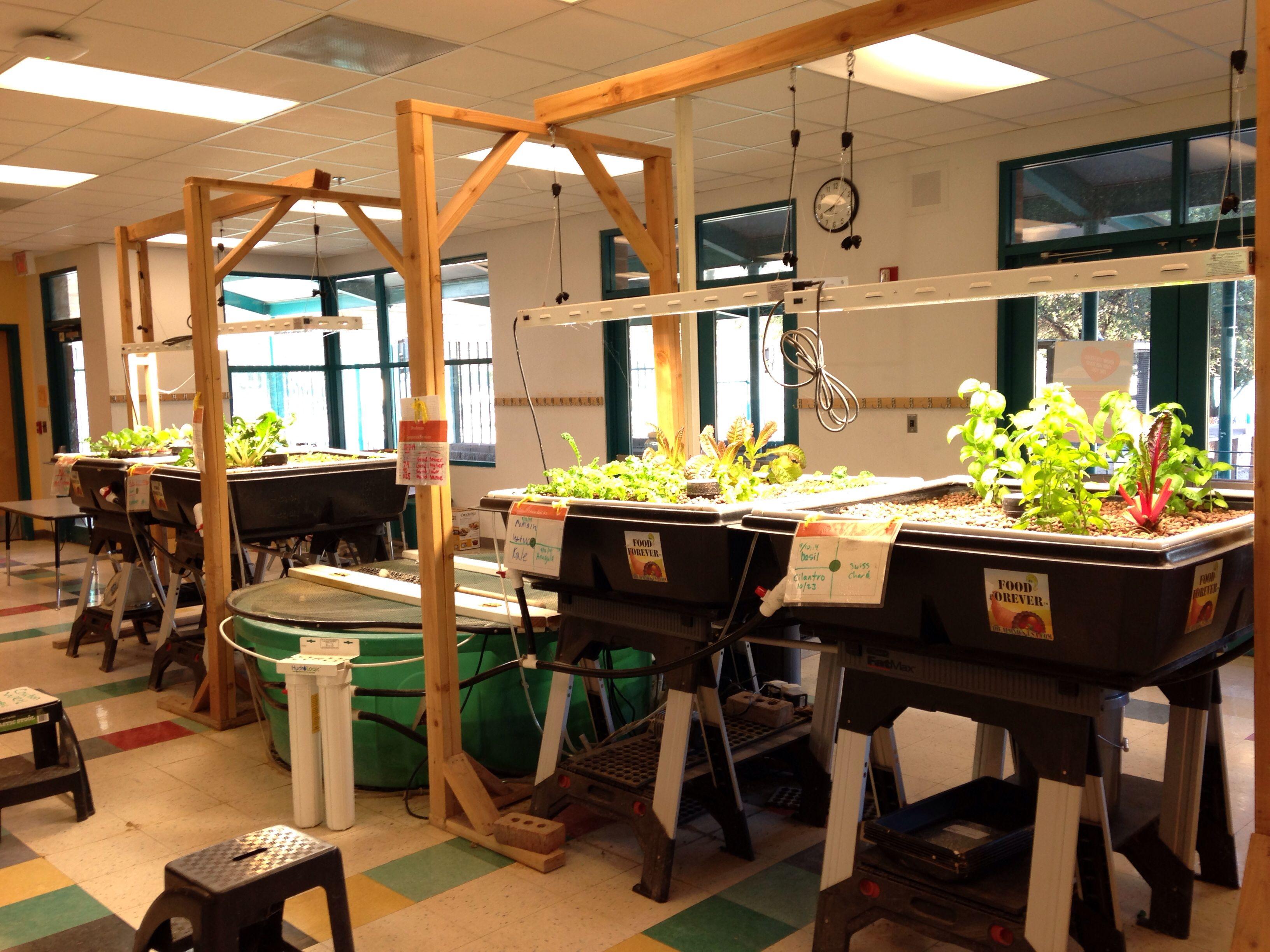 Aquaponics Ecology projects, Aquaponics, Decor
