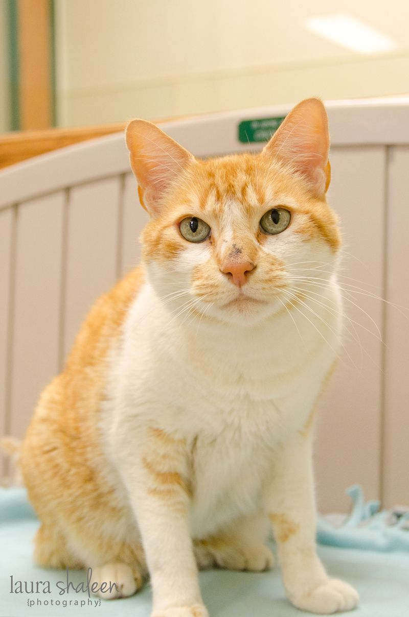 Compassionate Care Animal Hospital Minnesota