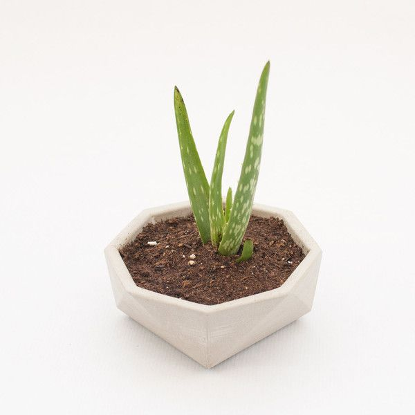 Modern cactus planter Small concrete plant pot Grey cement succulent... (121.390 COP) ❤ liked on Polyvore featuring home, home decor, floral decor, succulent pots, concrete flower pots, gray home decor, modern plant pots and cactus planter