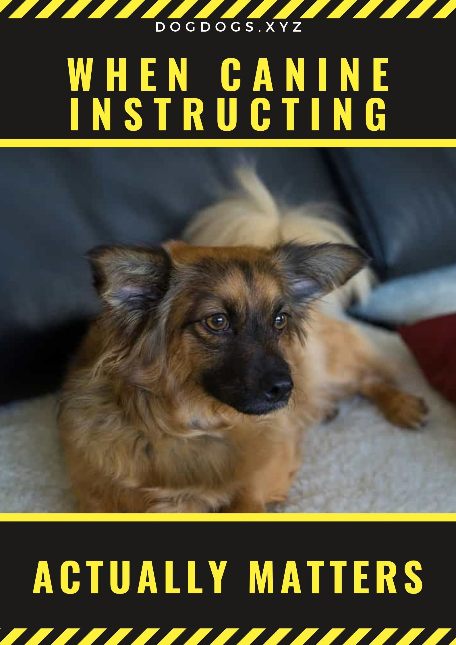 When Canine Instructing Actually Matters Dog Training Dogs