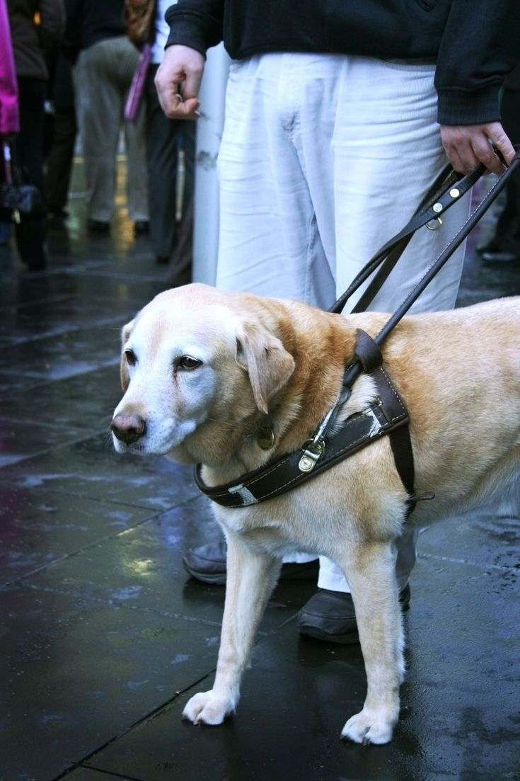 Living With MS Can Be Easier With a Service Dog Service