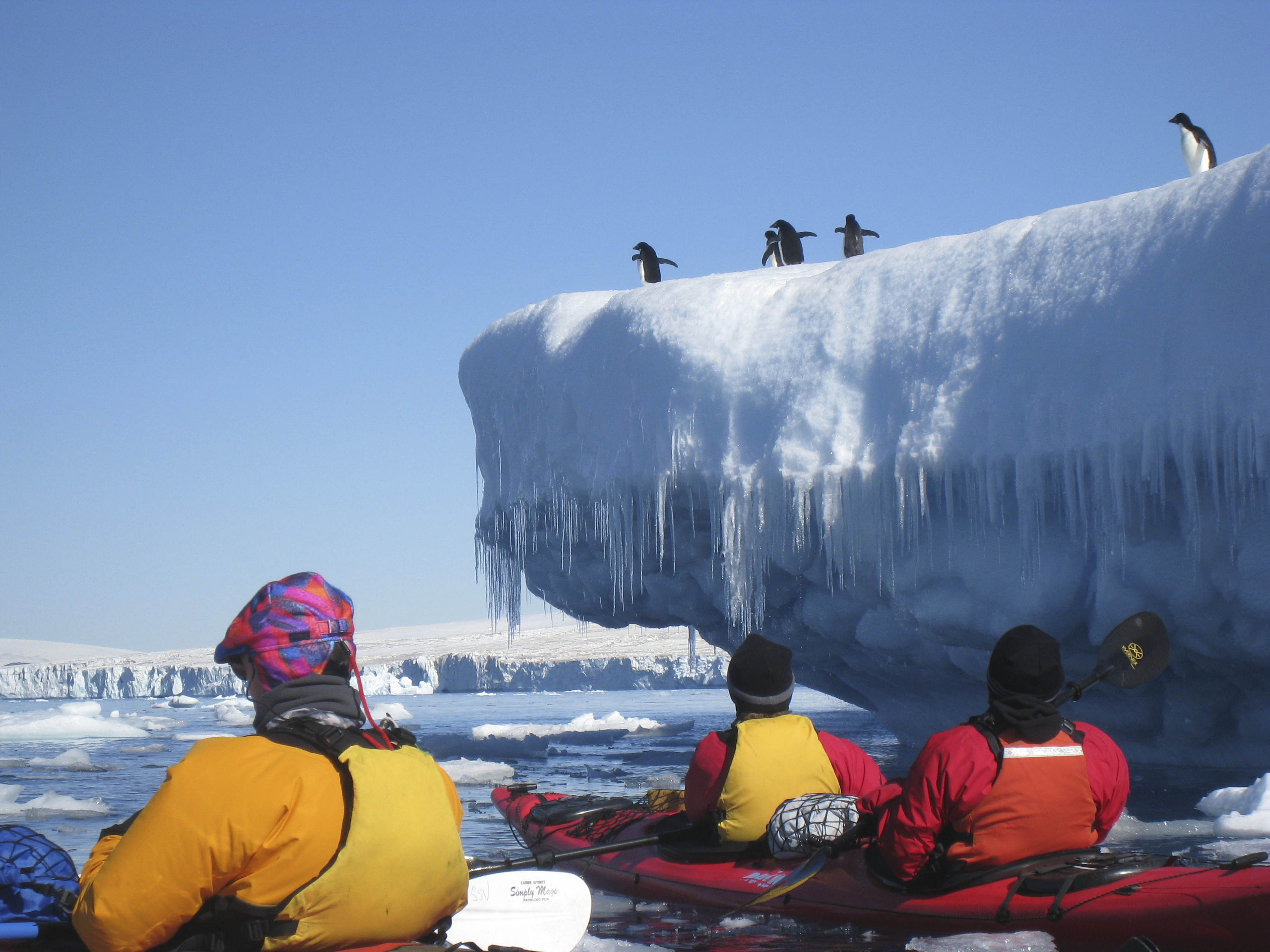 #Camping on ice, paddling through ice-ladden channels or exploring the underwater world - our fellow expeditioners certainly have a trip of a lifetime in #Antarctica! http://bit.ly/1DZbtSM #Auroraexpeditions #Travel #Bucketlist #Penguins #Iceberg