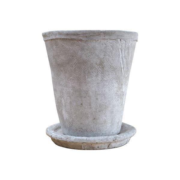 ベランダ組だったベンジャミン・バロックを室内用の鉢に植え替えました♪