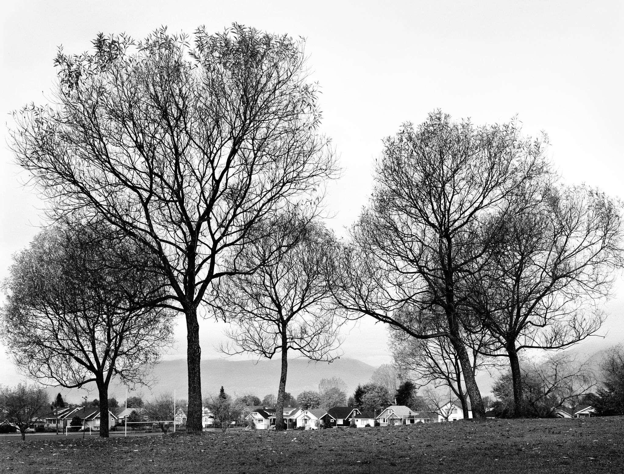 Photograph trees in vancouver black and white by pekka pasivirta on 500px