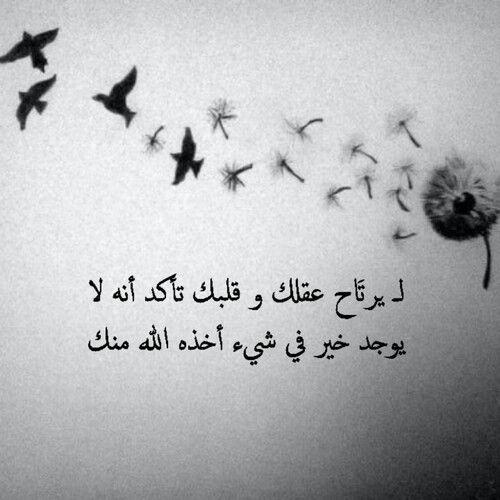 حكم أقوال رمزيات من الحياة حكمة الصياد والطيور Wisdom Quotes Life Jokes Quotes Quotes For Book Lovers
