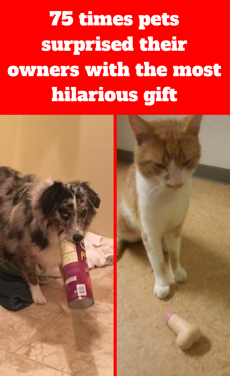 70 Times Pets Surprised Their Owners With The Most Hilarious Gift In 2020 Hilarious 22 Words Funny Gifts