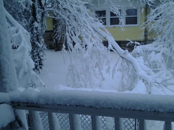 Same snow on 2/25/2013 @8am  building up on power line and those branches are normally 7-8 ft up.