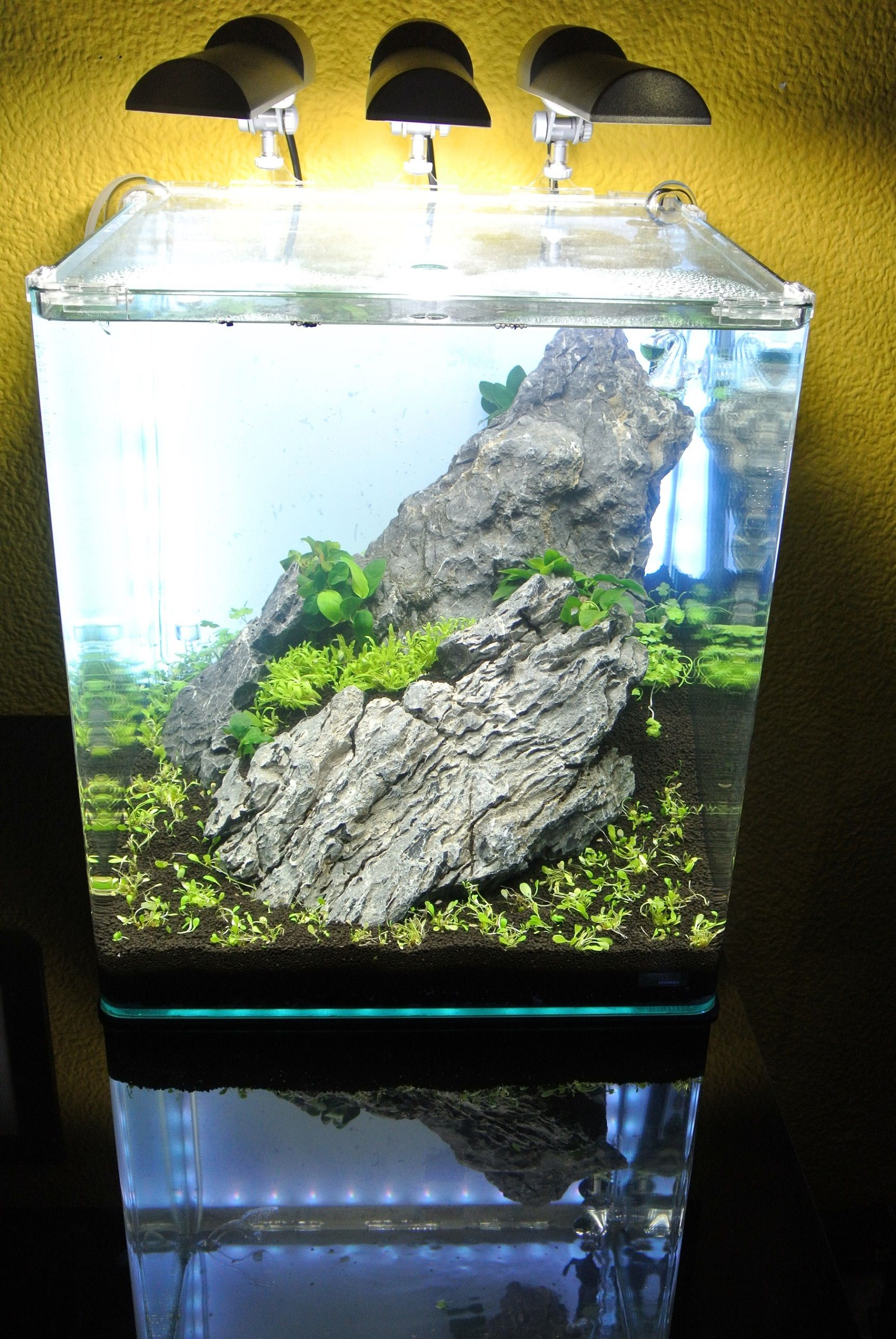 bildergebnis f r aquascaping dennerle nano cube 60 l aquarium pinterest cube aquariums. Black Bedroom Furniture Sets. Home Design Ideas