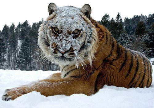 Go Ahead Throw Another Snow Ball Funny Animal Pictures Funny