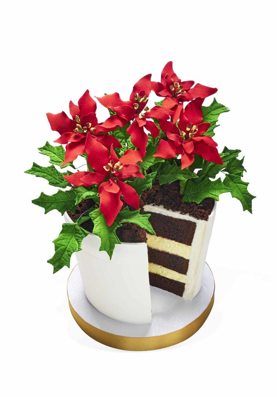 Oprah S Poinsettia Flower Pot Cake Flower Pot Cake Pot Cakes Oprahs Favorite Things