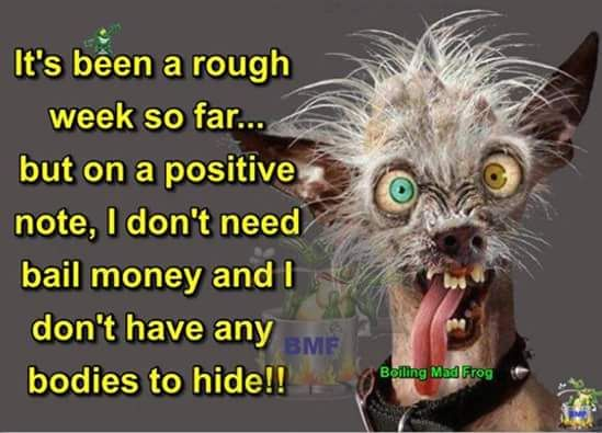 Ruff Day At Work Bail Money Positive Notes Work Quotes Funny