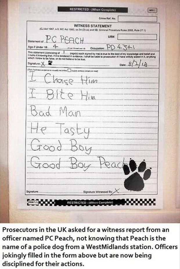 Funny Pictures 49 Pics Police Dogs K9 Police Dogs K9 Officer