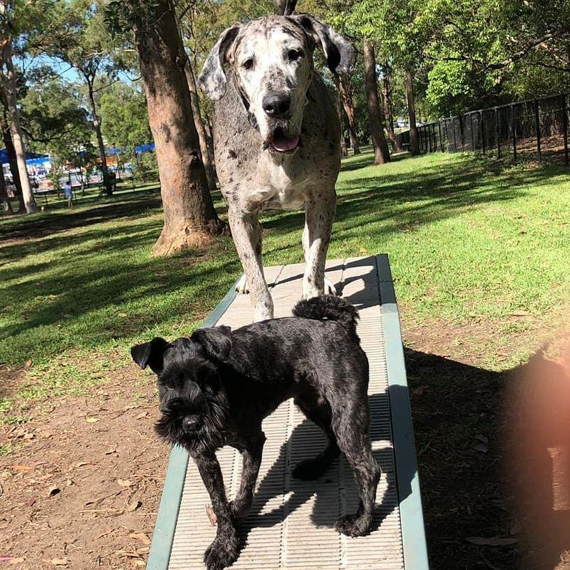 Happy Hump Day Maddogsbrisbane Brisbane Brisbanedogs