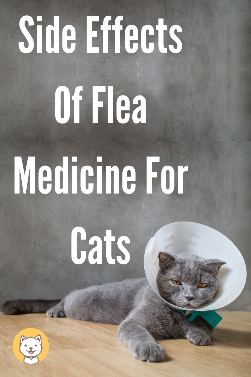 Side Effects Of Flea Medicine For Cats Kitty Cats Blog In 2020 Cat Medicine Flea Medicine For Cats Cats