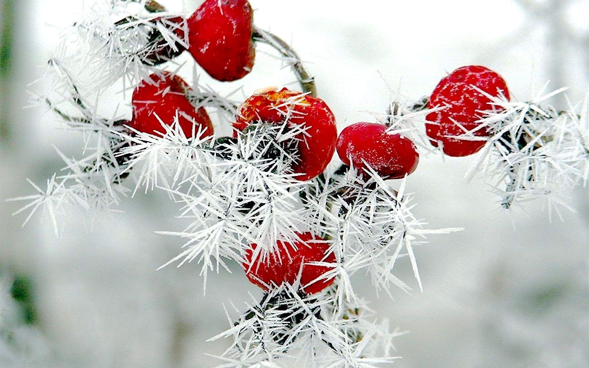 картинки на рабочий стол зимние растения трамвайчики