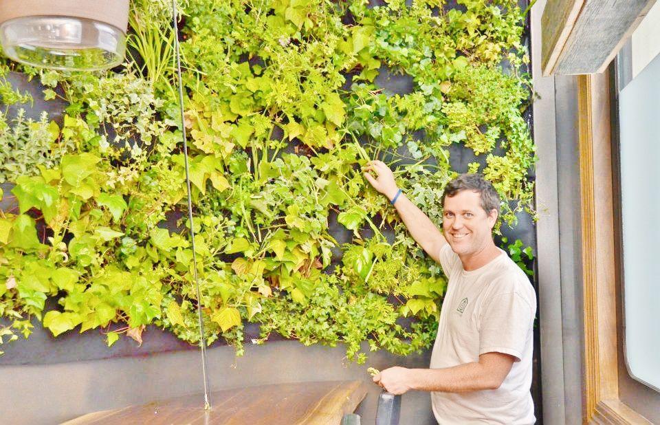 Vertical garden installation - Atera Restaurant, NY   #verticalgarden #green #sustainable  Stamford, CT    www.greenupgroup.com