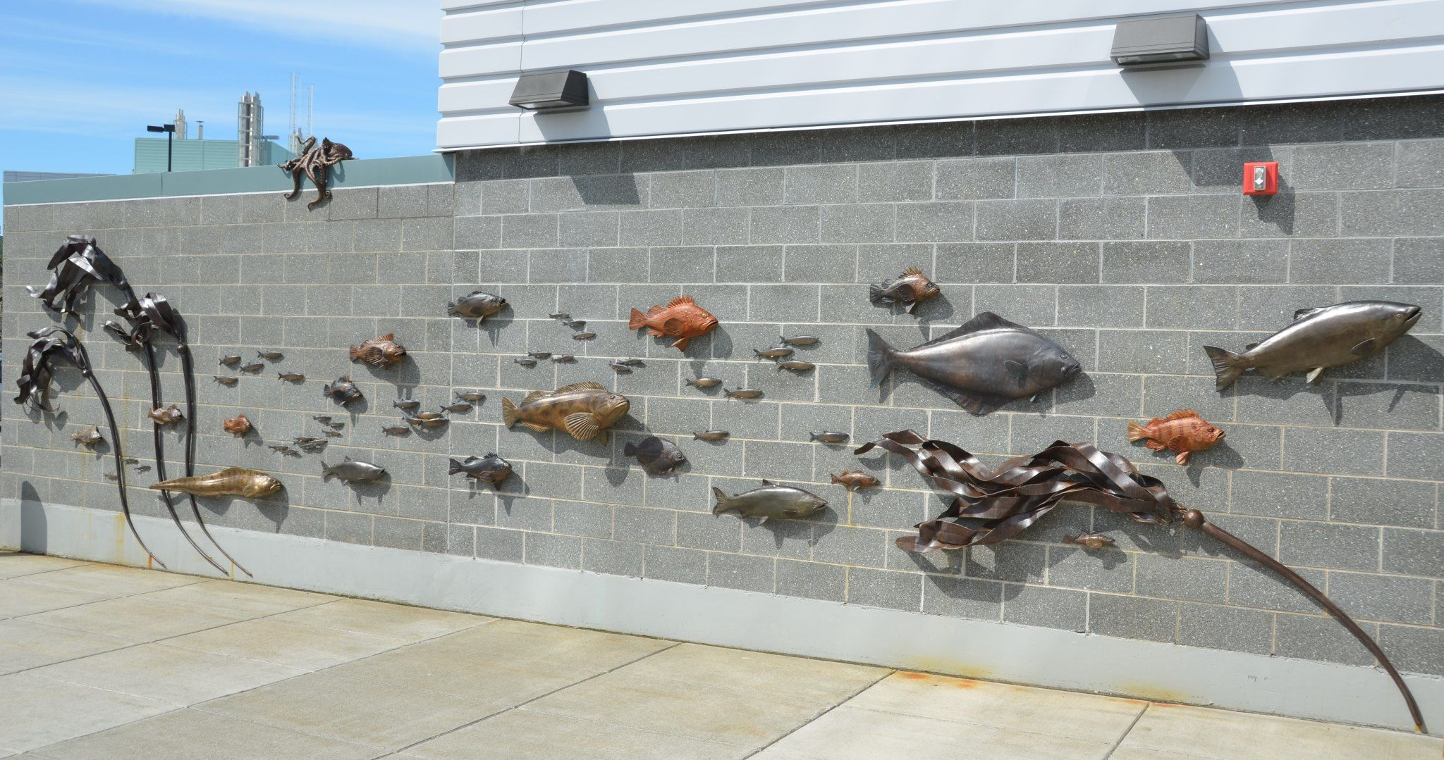 bronze installation up in Juneau, AK. Created for the University of Alaska at Lena Point in collaboration with Ray Troll.