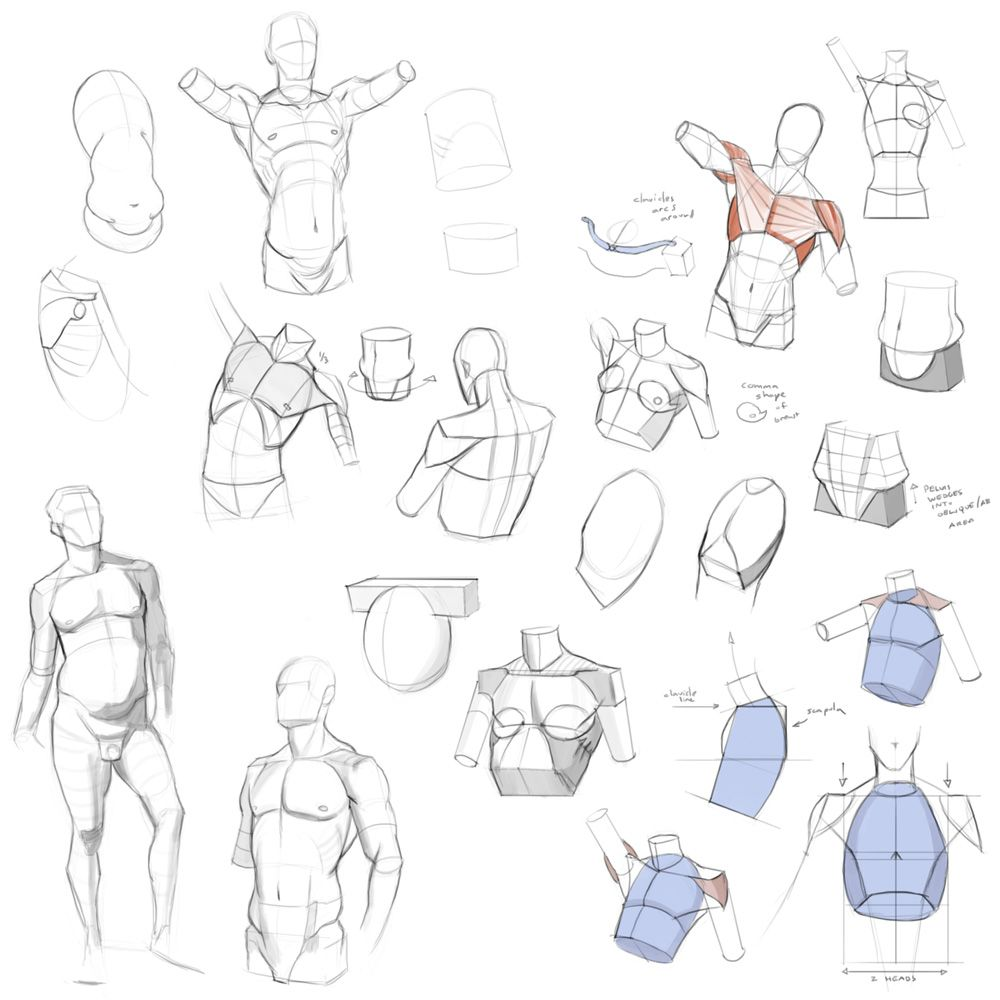 Pin by Dani on ref | Pinterest | Anatomy, Draw and Sketches