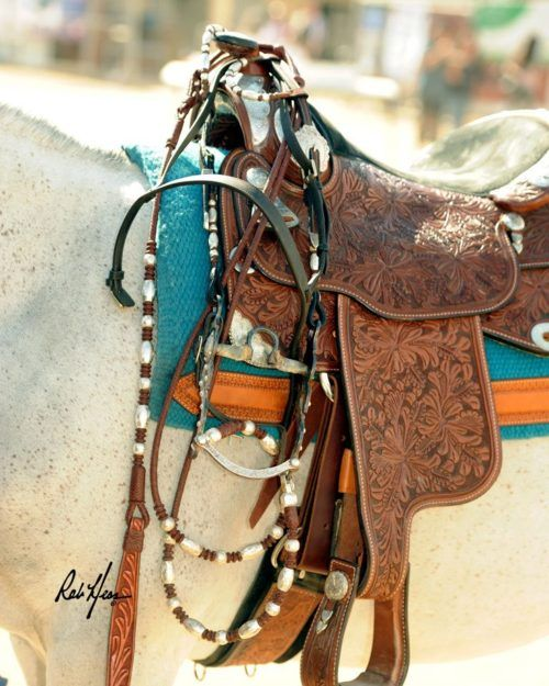 working cow horse Cutting western quarter paint horse ...