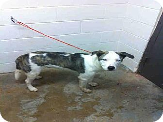 No Longer Listed Oklahoma Id A010374 Is A Catahoula Mix In Need Of A Lo Pets Dog Mixes Catahoula Mix