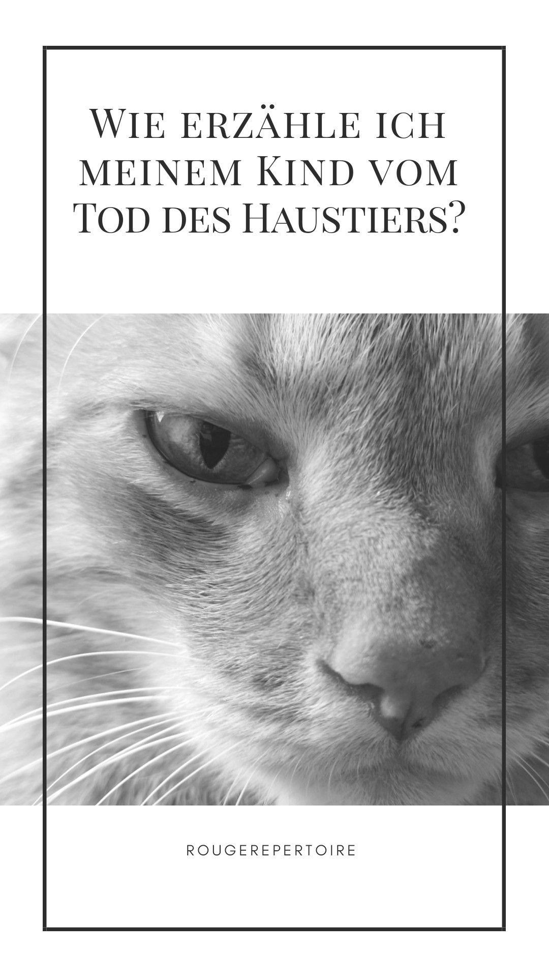 Katze Gestorben Spruch
