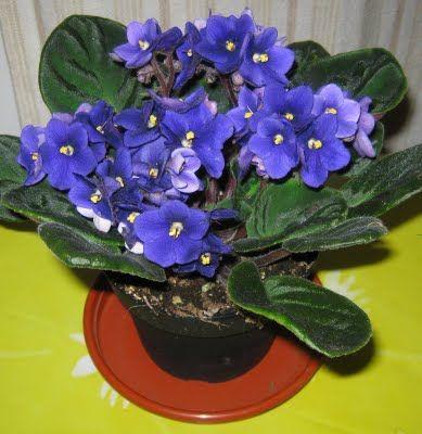 vaso violetas - Google Search