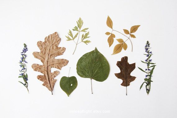 Bits of Autumn - 8x10. Fine Art Photographic Natural History Print. Minimal simple style. Natural Home Decor. Indoor garden botanical. $30.00, via Etsy.