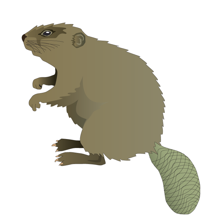 Our Symbol Of The Week Is The North American Beaver The Beaver