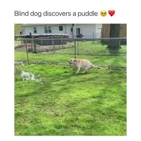 Dog discovers puddle fun!