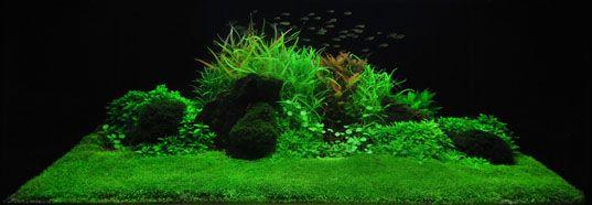 Extraplant Aquarium Plant Shop