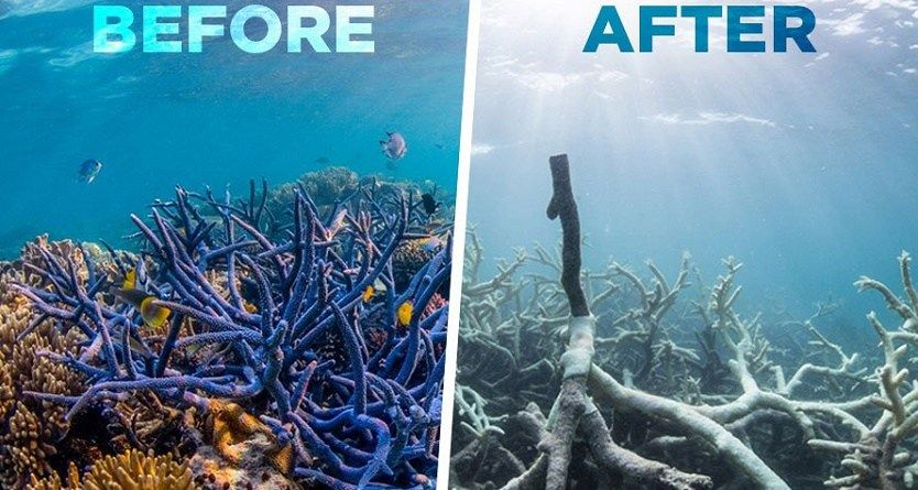 Great Barrier Reef Australia Dead What Next Coral