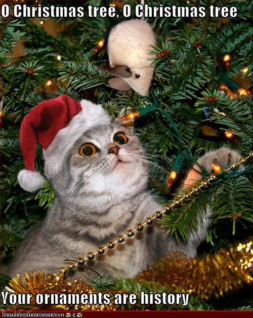Oh Christmas Tree Oh Christmas Tree Your Ornaments Are History Reminds Me Of My Cat Nay Nay Christmas Cats Cat Christmas Tree Cute Cats