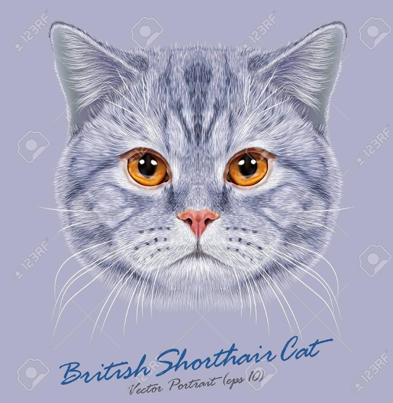 Vector Retrato De British Gato Corto Cabello Lindo Gato Doméstico Gris Con Ojos De Color Naranja Short Hair Cats Cats Domestic Cat