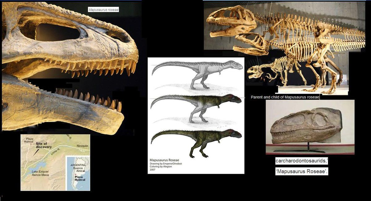 Carcharodontosauridae Pinterest