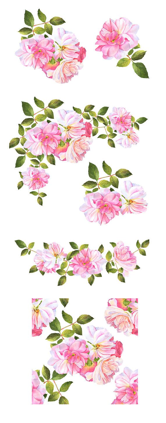 Roses watercolor clipart, Flower clipart, Watercolor roses ...