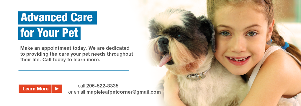 A Gift Card From Our Friends At Maple Leaf Pet Corner Animal Hospital Veterinary Hospital Pet Health Care